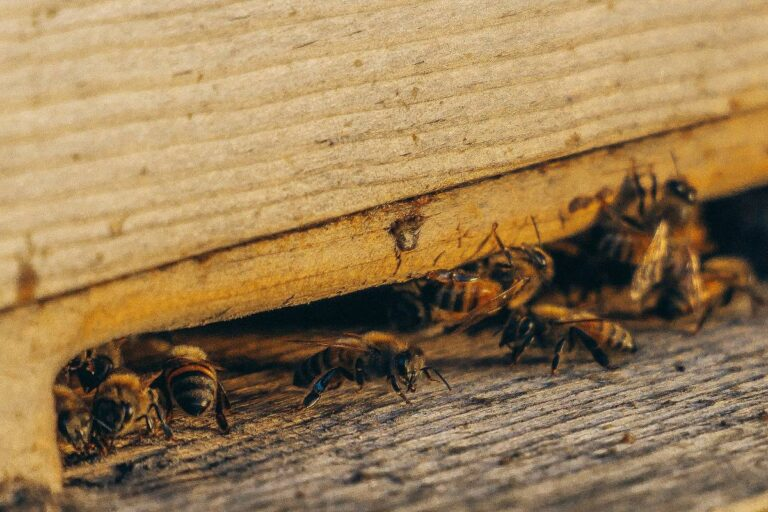 How To Select a Reputable Pest  Control Service?